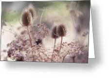 Morning Softness. Wild Grass Greeting Card