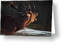 Morning Stag Greeting Card