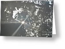 Morning Star 16-01 Greeting Card