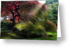 Morning Sun Rays On Old Japanese Maple Tree In Fall Greeting Card