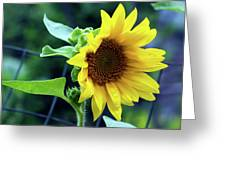 Morning Sunflower Greeting Card