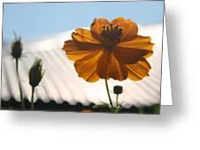 Morning Sunlight Greeting Card