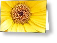 Morning Sunshine Greeting Card