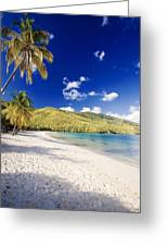 Morning Sunshine In Magens Bay Greeting Card