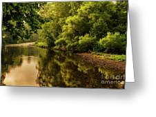 Morning Warmth Williams River  Greeting Card