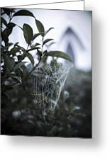 Morning Web With Dew Greeting Card