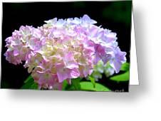 Morning Whisper - Hydrangea Greeting Card
