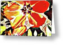 Moro Bright Greeting Card