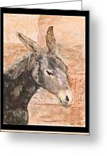 Moroccan Donkey Greeting Card