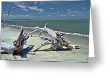 Morris Island Driftwood Greeting Card