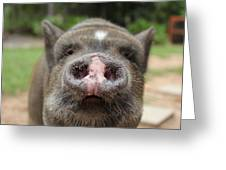 Morrison The Pig Greeting Card