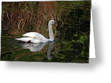 Mosaic Curious Swan  Greeting Card
