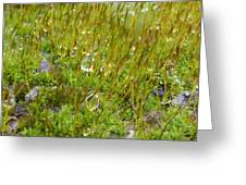 Moss And Drops Greeting Card