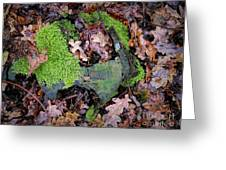 Moss And Leaves Greeting Card