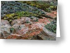 Moss And Lichen Abstract Greeting Card