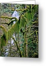 Moss At Munson Creek Greeting Card