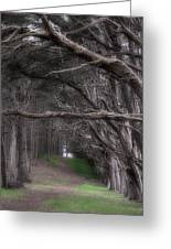 Moss Beach Trees 4191 Greeting Card