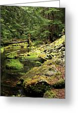 Moss By The Stream Greeting Card