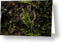 Moss Colony Greeting Card