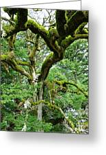 Moss Covered Arms Greeting Card