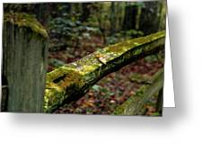 Moss Covered Fence Greeting Card