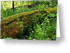 Moss Covered Log 2 Greeting Card