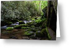 Moss Covered River Rocks Greeting Card