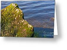 Moss Covered Rock And Ripples On The Water Greeting Card