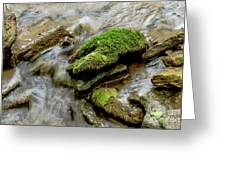 Moss Covered Rock Greeting Card