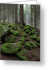 Moss Covered Rocks Greeting Card