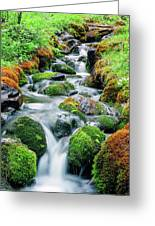 Moss Covered Stream Greeting Card