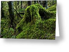 Moss Covered Tree Stump Greeting Card