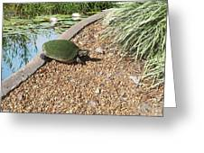 Moss Covered Turtle Greeting Card