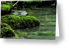 Moss In A Spring Greeting Card
