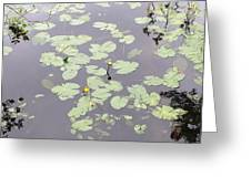 Moss Lake Greeting Card