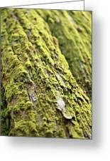 Moss On A Cedar Greeting Card