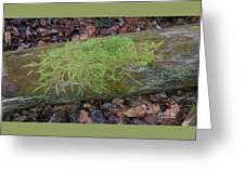 Moss On A Log Greeting Card