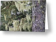 Moss On Pine Greeting Card