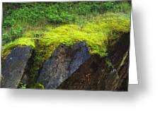 Moss On Rocks Greeting Card