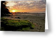 Moss On The Beach Greeting Card by Angie Wingerd