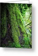 Moss On Tree Greeting Card