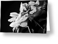 Moss Rose I Greeting Card