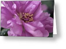 Moss Rose II Greeting Card