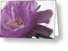 Moss Rose IIi Greeting Card
