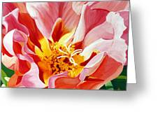 Moss Rose Greeting Card