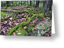 Moss Tree Roots Fall Color Greeting Card