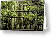 Mossy Bamboo Fence - Digital Art Greeting Card by Carol Groenen