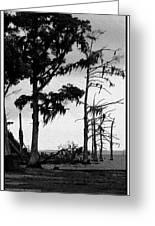 Mossy Beach Trees Greeting Card