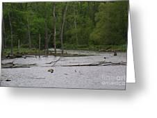 Mossy Bog Greeting Card