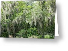 Mossy Branches Greeting Card